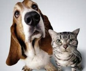скрещивание животных и человека
