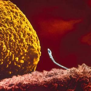 Когда и как происходит зачатие