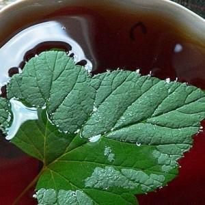 Отвар из листьев малины